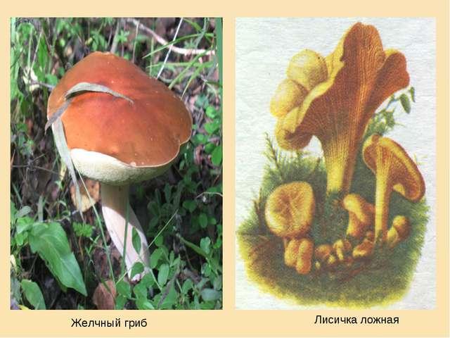 Желчный гриб Лисичка ложная