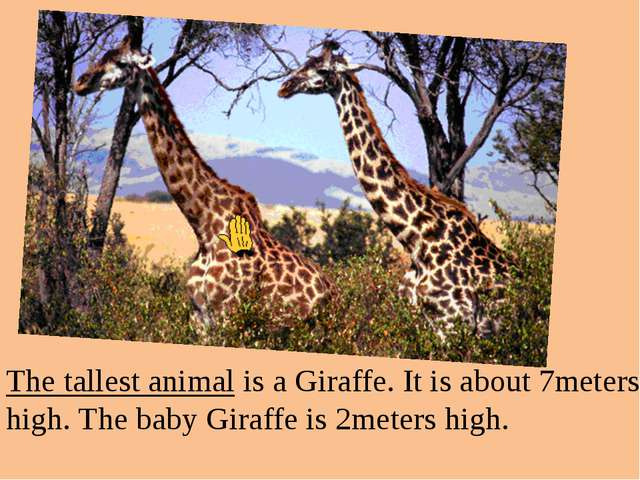 The tallest animal is a Giraffe. It is about 7meters high. The baby Giraffe i...