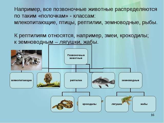 * Например, все позвоночные животные распределяются по таким «полочкам» - кл...