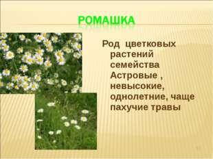 Род цветковых растений семейства Астровые , невысокие, однолетние, чаще пахуч