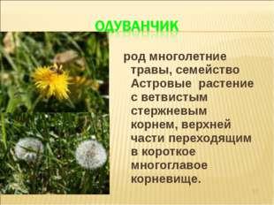 род многолетние травы, семейство Астровые растение с ветвистым стержневым ко