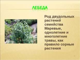 Род двудольных растений семейства Маревые, однолетние и многолетние травы, к