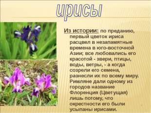 Из истории: по преданию, первый цветок ириса расцвел в незапамятные времена в