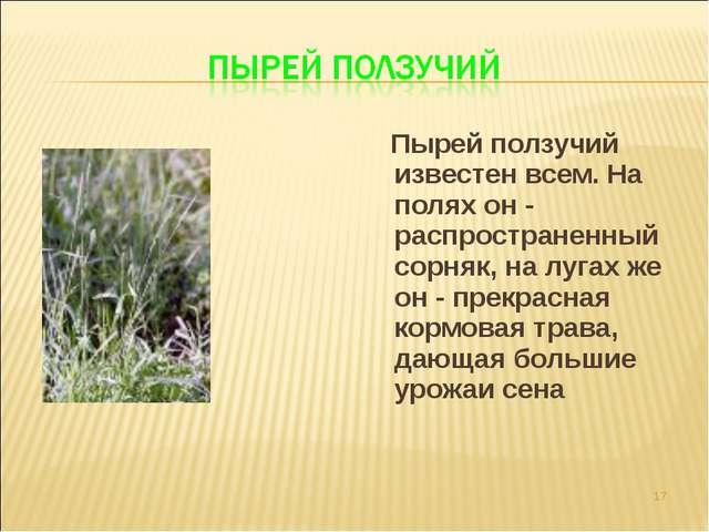 Пырей ползучий известен всем. На полях он - распространенный сорняк, на луга...