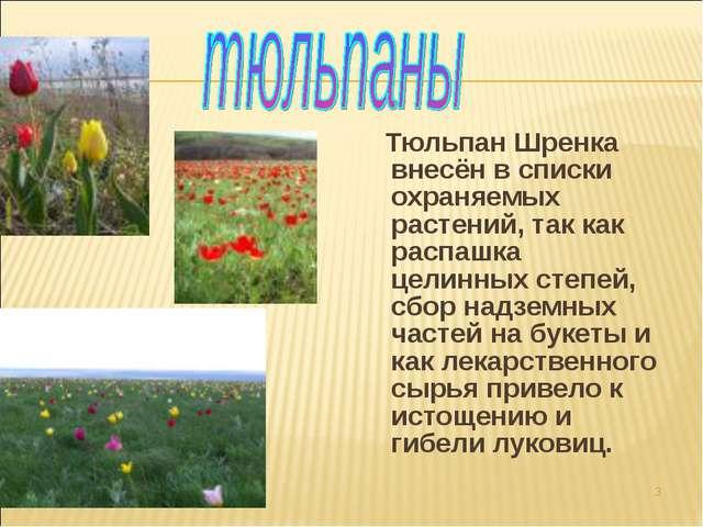 Тюльпан Шренка внесён в списки охраняемых растений, так как распашка целинны...