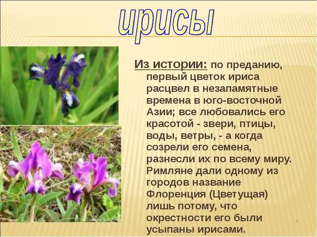 Из истории: по преданию, первый цветок ириса расцвел в незапамятные времена в...