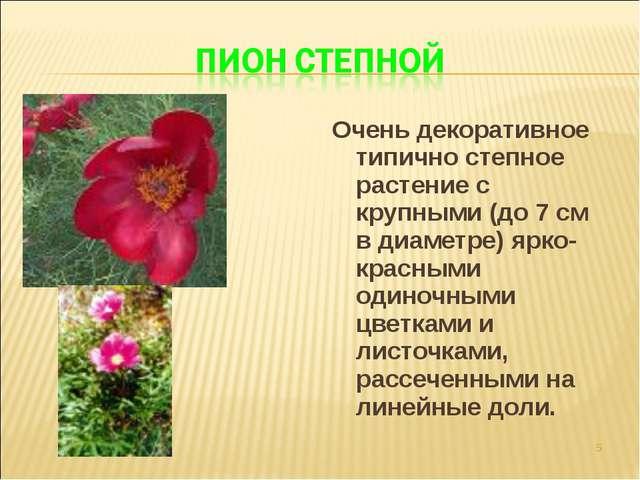 Очень декоративное типично степное растение с крупными (до 7 см в диаметре) я...