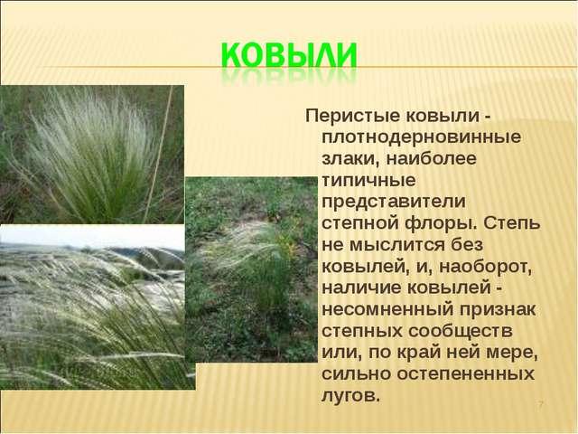 Перистые ковыли - плотнодерновинные злаки, наиболее типичные представители с...