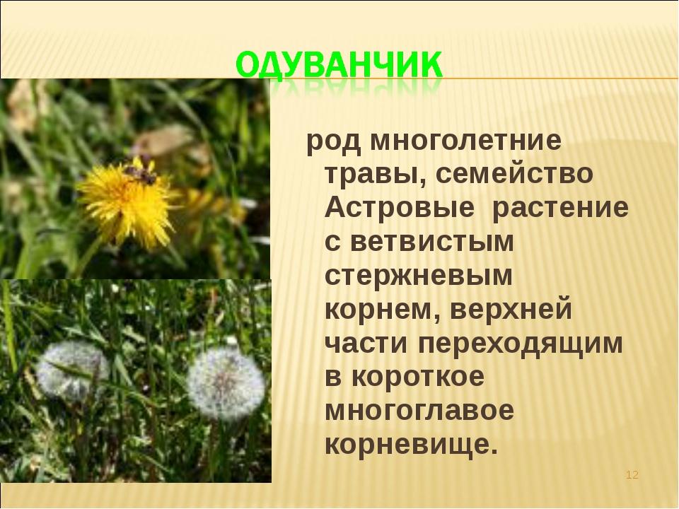 род многолетние травы, семейство Астровые растение с ветвистым стержневым ко...
