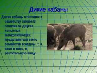 * Дикие кабаны Дикие кабаны относятся к семейству свиней В отличие от других