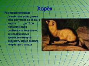 * Хорёк Род млекопитающие семейство куньих длина тела достигает до 48 см, а х
