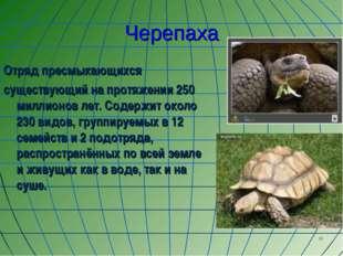 * Черепаха Отряд пресмыкающихся существующий на протяжении 250 миллионов лет.