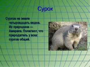 * Сурок Сурков на земле четырнадцать видов. Их прародина — Америка. Полагают,