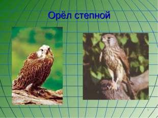 * Орёл степной