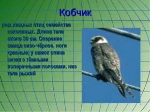 * Кобчик род хищных птиц семейства соколиных. Длина тела около 30 см. Оперени