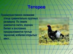 * Тетерев Преимущественно наземная птица сравнительно крупных размеров По зем