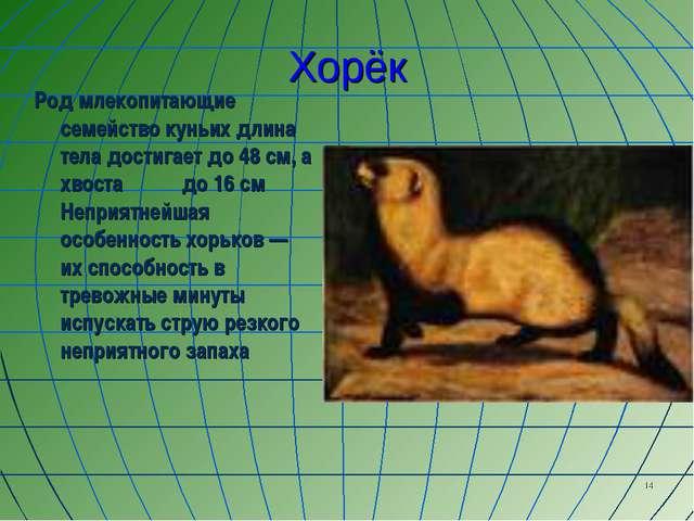 * Хорёк Род млекопитающие семейство куньих длина тела достигает до 48 см, а х...