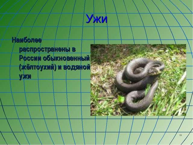 * Ужи Наиболее распространены в России обыкновенный (жёлтоухий) и водяной ужи