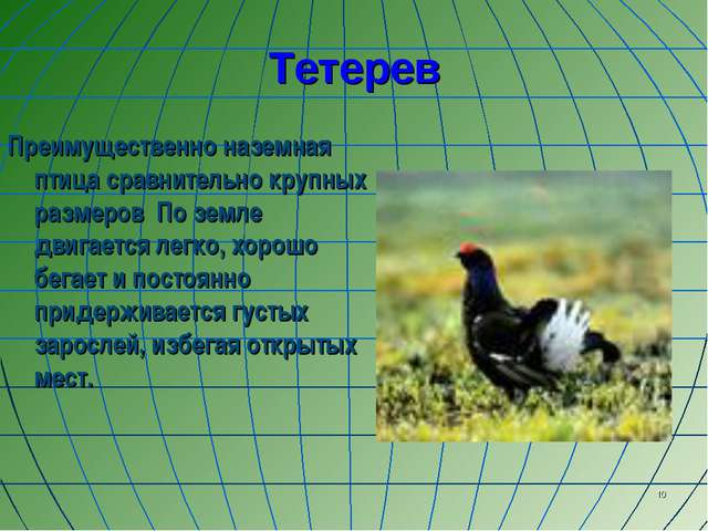 * Тетерев Преимущественно наземная птица сравнительно крупных размеров По зем...