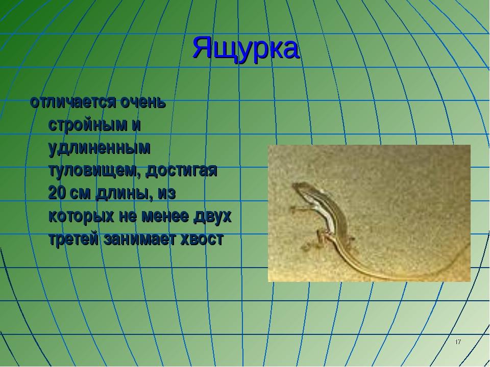 * Ящурка отличается очень стройным и удлиненным туловищем, достигая 20 см дли...