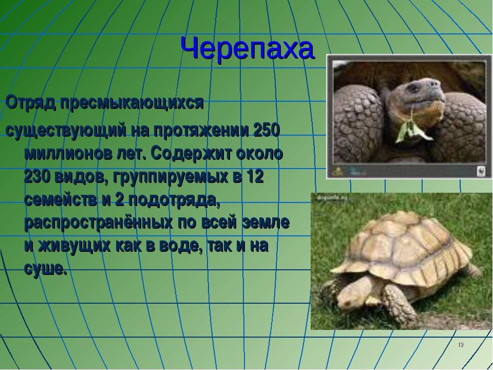 * Черепаха Отряд пресмыкающихся существующий на протяжении 250 миллионов лет....