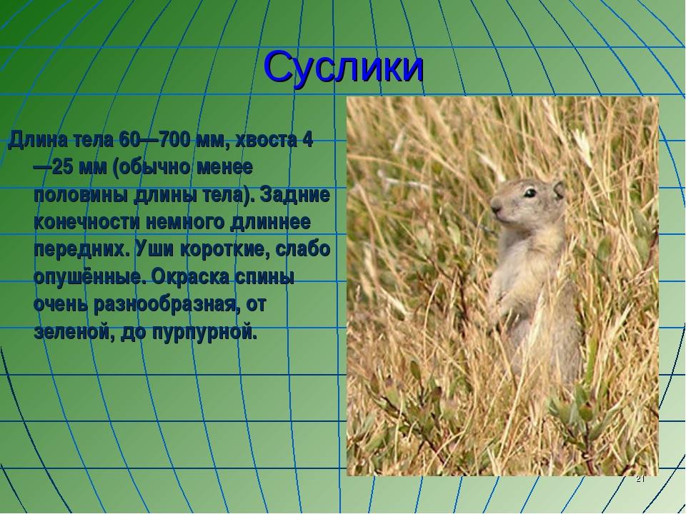Суслики Длина тела 60—700 мм, хвоста 4—25 мм (обычно менее половины длины тел...