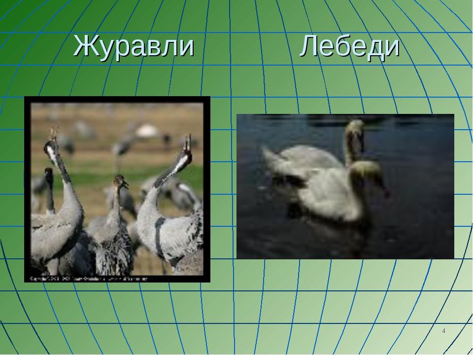 * Журавли Лебеди