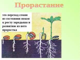 это переход семян из состояния покоя к росту зародыша и развитию из него прор
