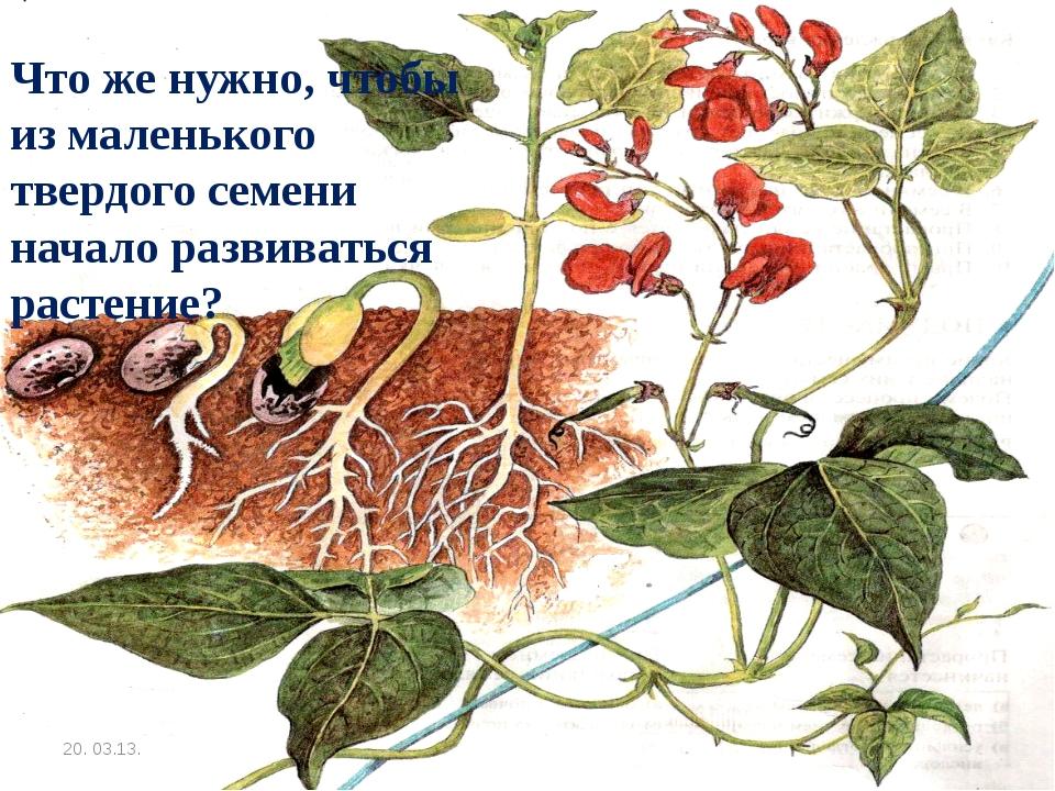 20. 03.13. Что же нужно, чтобы из маленького твердого семени начало развивать...