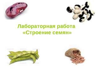 Лабораторная работа «Строение семян»