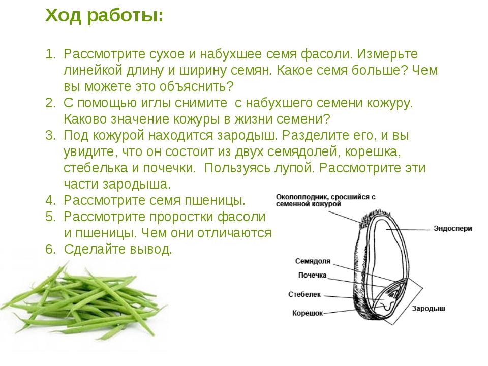 Ход работы: Рассмотрите сухое и набухшее семя фасоли. Измерьте линейкой длину...