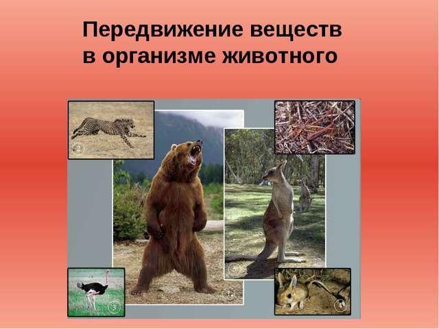 Передвижение веществ в организме животного