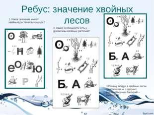 Ребус: значение хвойных лесов 1. Какое значение имеют хвойные растения в прир