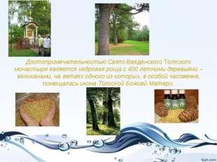Достопримечательностью Свято-Введенского Толгского монастыря является кедрова