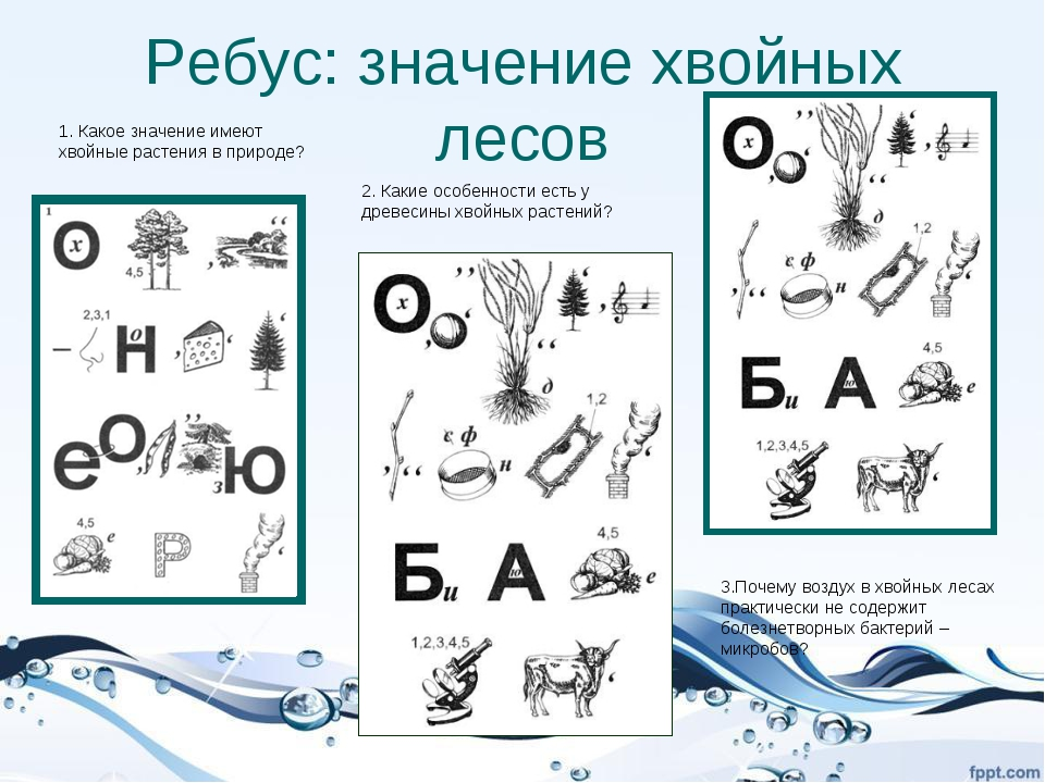 Ребус: значение хвойных лесов 1. Какое значение имеют хвойные растения в прир...