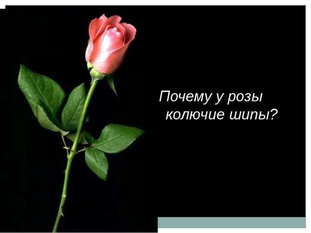 Почему у розы колючие шипы?