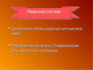 Центральные органы (красный костный мозг, тимус) Периферические органы (Лимф