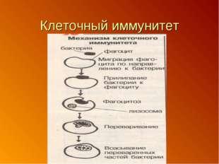 Клеточный иммунитет