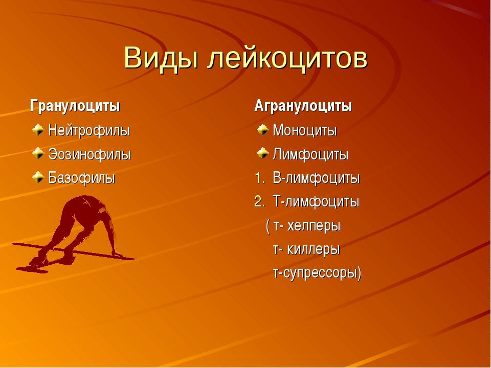 Виды лейкоцитов Гранулоциты Нейтрофилы Эозинофилы Базофилы Агранулоциты Моноц...