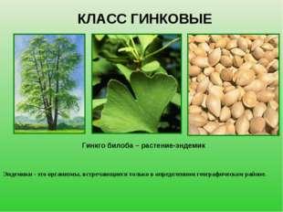 КЛАСС ГИНКОВЫЕ Гинкго билоба – растение-эндемик Эндемики - это организмы, вст