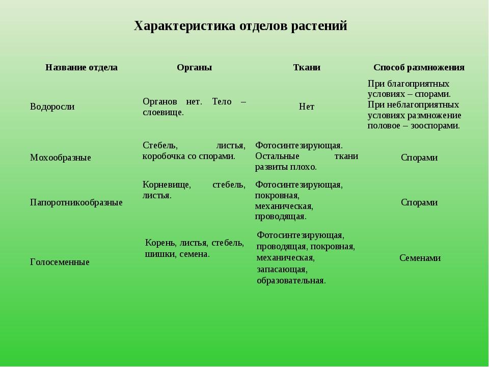 Характеристика отделов растений Корень, листья, стебель, шишки, семена. Фотос...