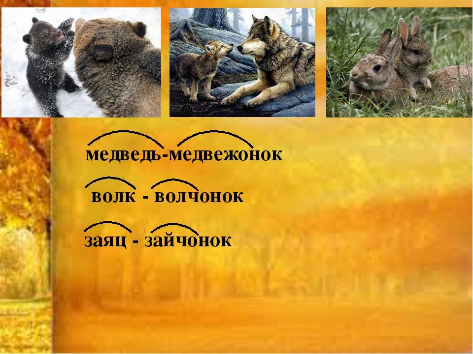 медведь-медвежонок волк - волчонок заяц - зайчонок