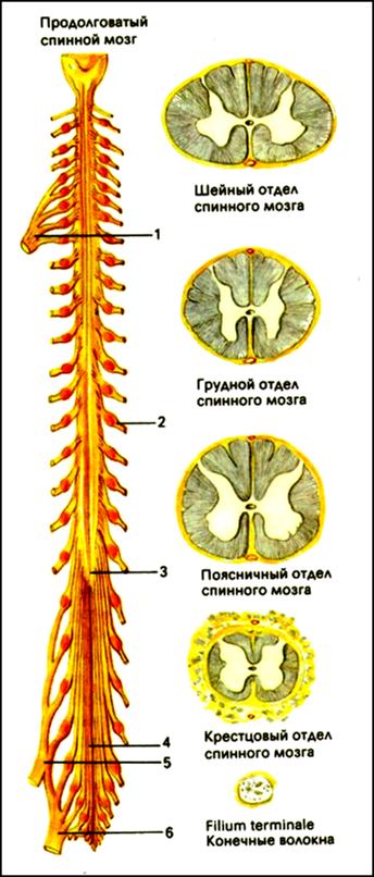 http://aniavetisyan.volsk-sch11.edusite.ru/images/risunok132.png