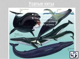 - Синий кит - достигает 33 м, массы 150 тонн (25 слонов, или 150 быков) - Мас