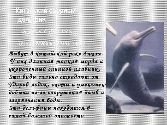 Охрана китообразных Численность сократилась из-за интенсивного промысла. Мног...