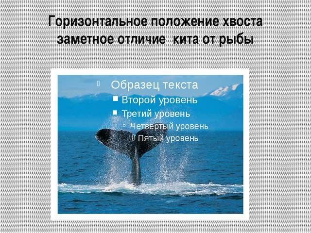 Усатые киты