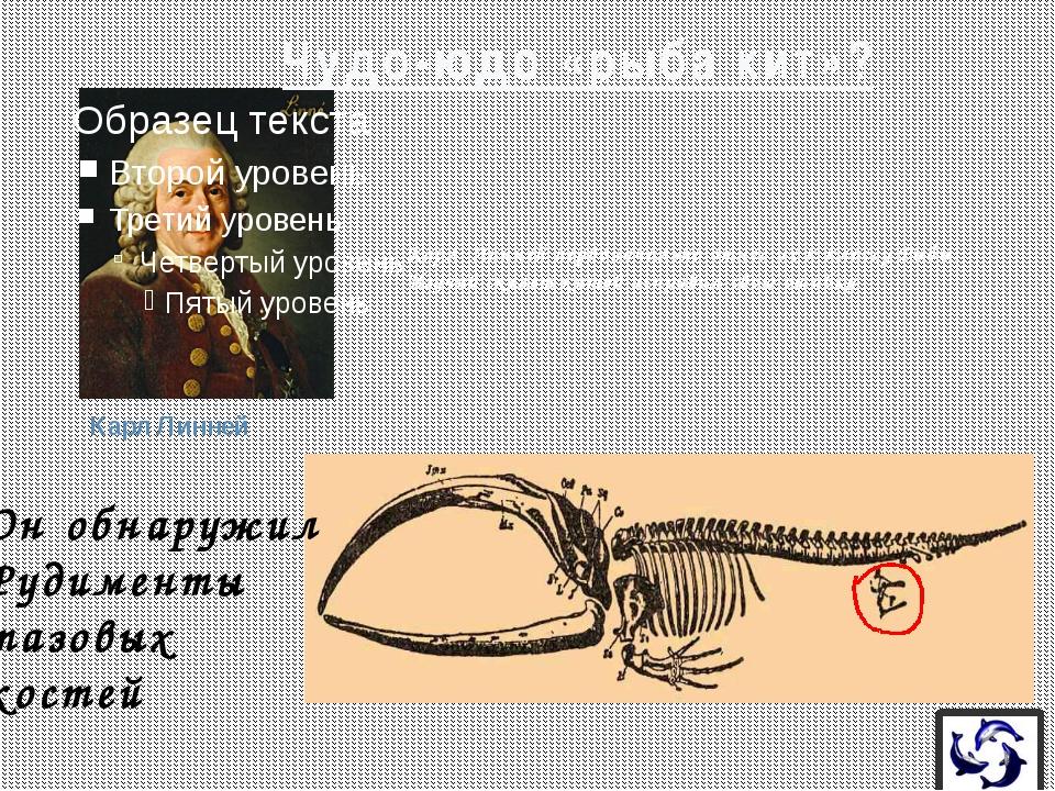 Горизонтальное положение хвоста заметное отличие кита от рыбы