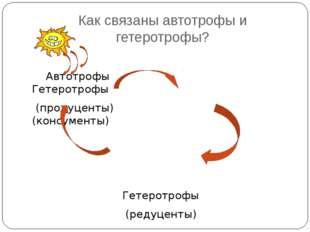 Как связаны автотрофы и гетеротрофы? Автотрофы Гетеротрофы (продуценты) (конс