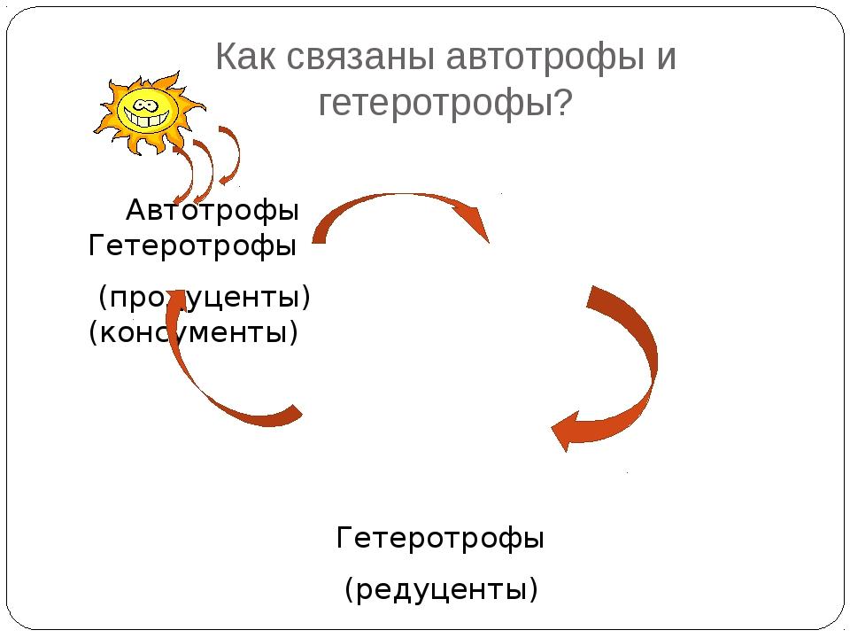 Как связаны автотрофы и гетеротрофы? Автотрофы Гетеротрофы (продуценты) (конс...