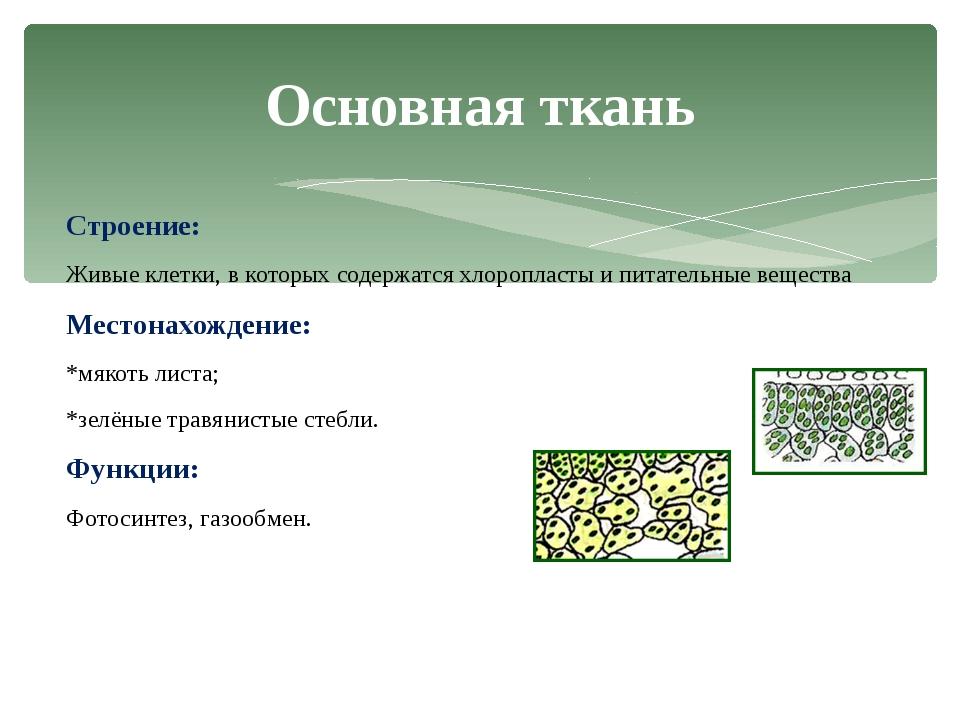 Строение: Живые клетки, в которых содержатся хлоропласты и питательные вещест...